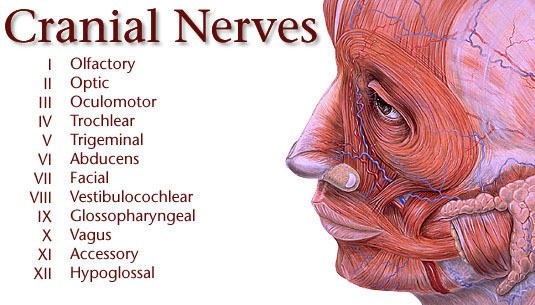 Who has the best Cranial Nerve Acronym!  Student Doctor