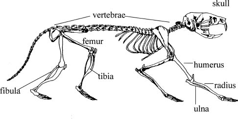 VOLE skeleton
